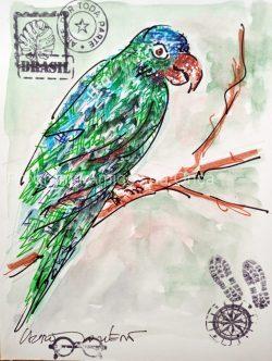 """""""Aratinga-de-testa-azul, Blue-crowned parakeet"""", por Lauro Monteiro Filho"""