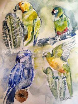 """Parrots of the Caatinga"", por Inge Eisenhauer"