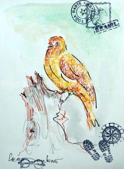 """""""Canário-da-terra-verdadeiro, Saffron Finch"""", por Lauro Monteiro Filho"""