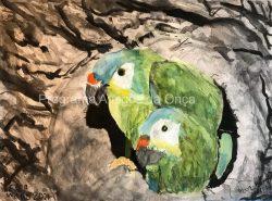 """Blue-winged macaw"", por Peter Ward"
