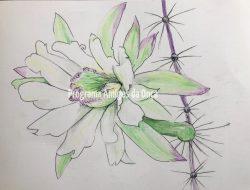 """""""Mandacaru, Cactus"""", por Virginia Nicol"""