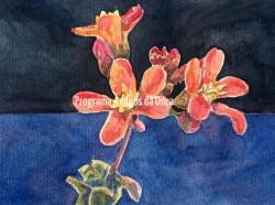 """""""Flor da Caatinga"""", por Veridiana Magalhães"""